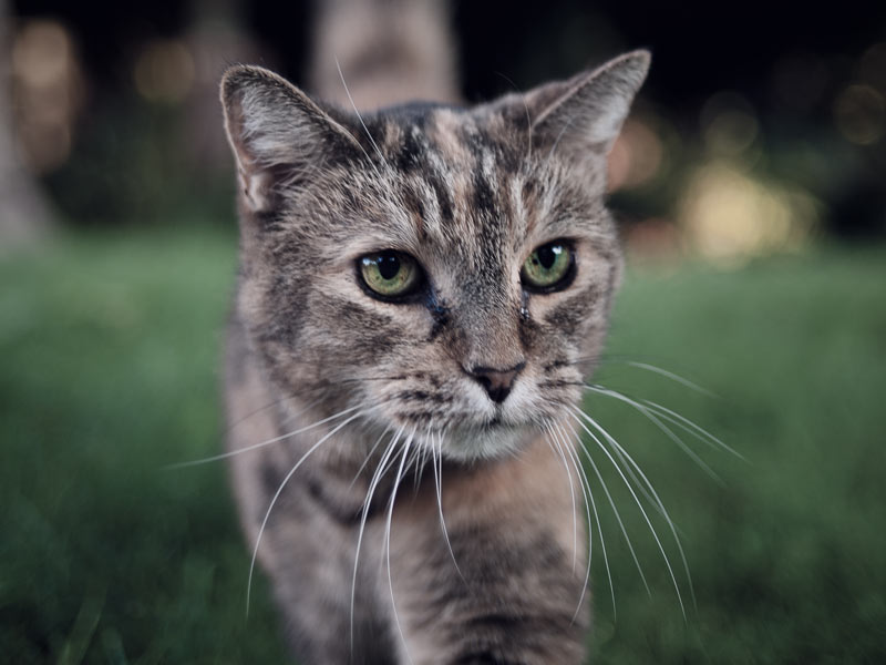 home_animals_photo17