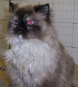 bathed_cat